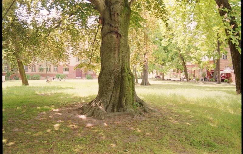 Projekt-Teaserbild für Arboretum der Zukunft  – Erfinderische Expeditionen
